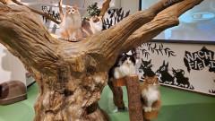 猫の島カフェ内観.jpg