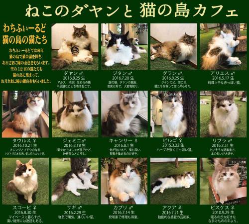 猫の島カフェ猫の紹介看板.jpg