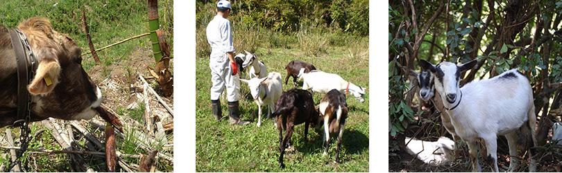 山地酪農イメージ