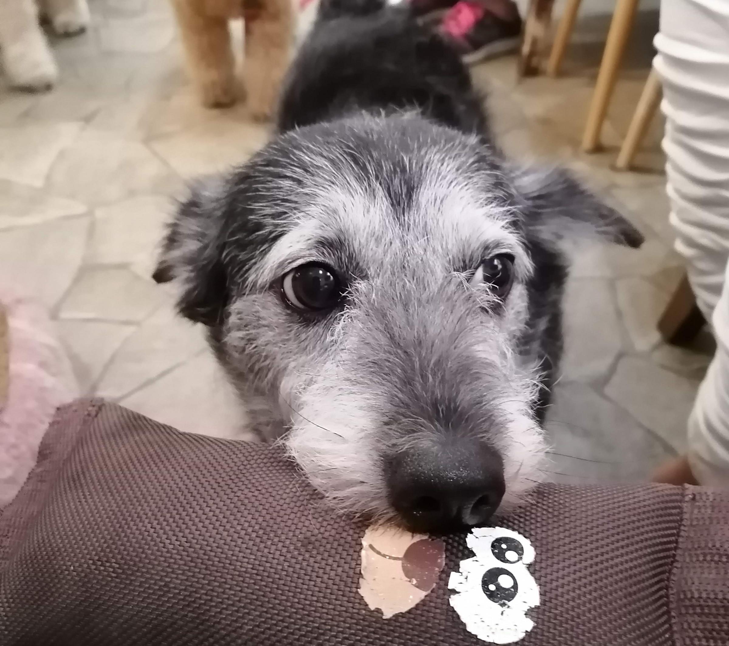 カフェ 千葉 犬 保護