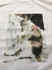 猫image1.jpeg