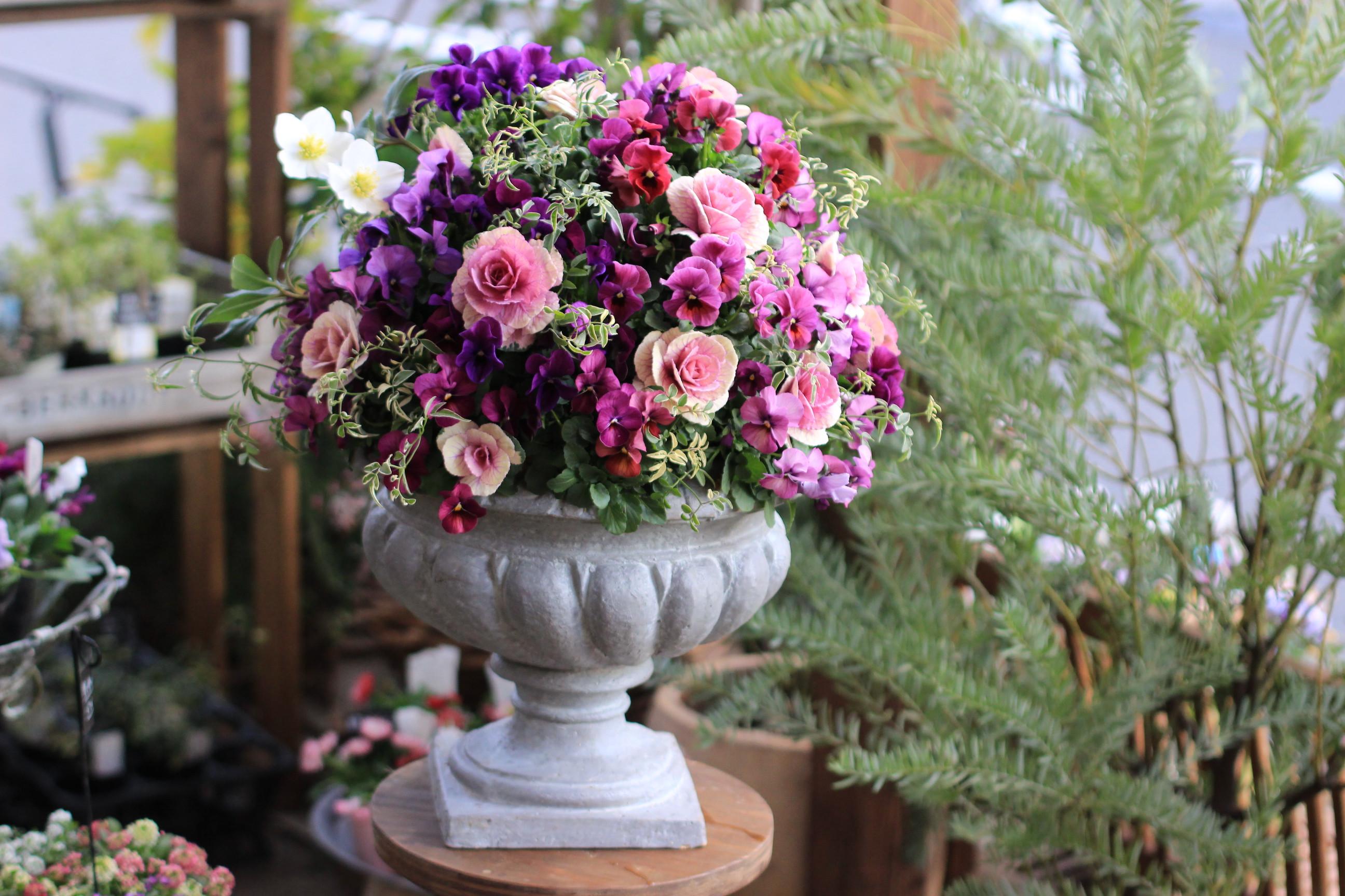 お花たちが入荷しました