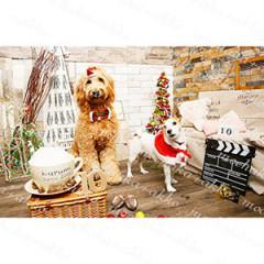 cafe+dog kurumi