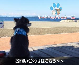 横浜でペット預かりしています。