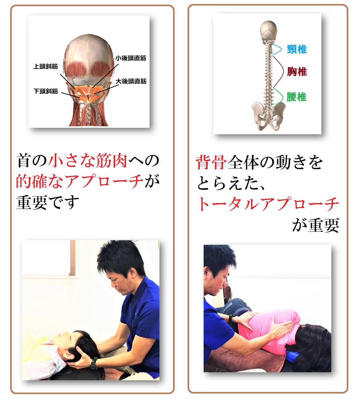 首と背骨 2.png