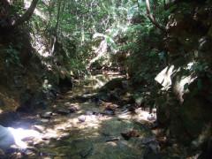自然2.jpg