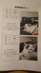 7月猫ちゃん1.jpg