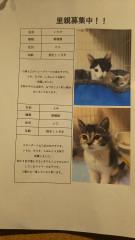 7月猫ちゃん2.jpg