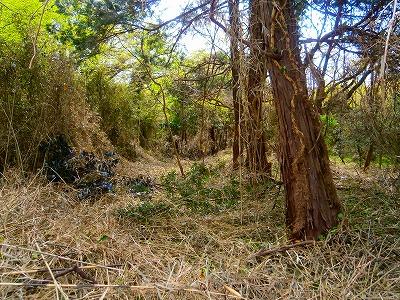 君津市山滝野山林2,740坪 3,300万円