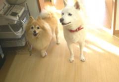 shiro & cherry.JPG
