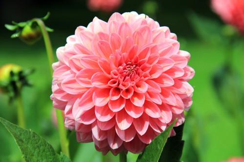 flower-197343_1280.jpg