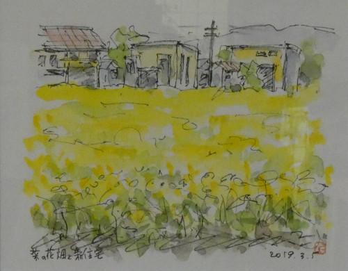菜の花畑と新住宅.jpg