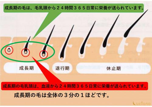 脱毛説明用_page-0002.jpg