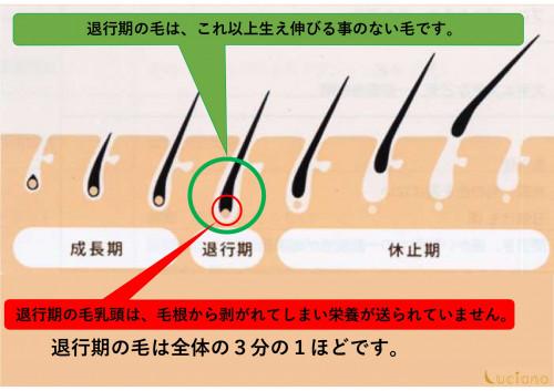 脱毛説明用_page-0003.jpg