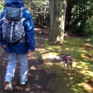 わんちゃんにとって散歩とは