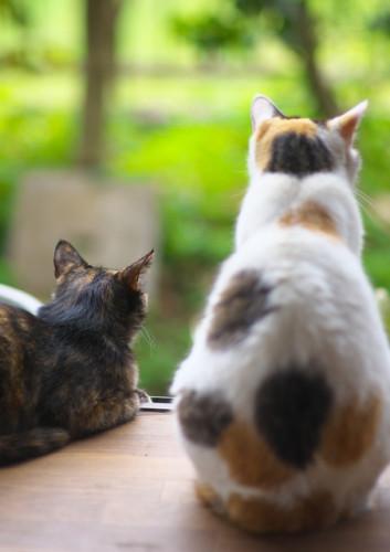 猫の火葬.jpg
