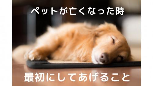 ペット亡くなったら最初にしてあげること福岡市ペット火葬ばんれいパーク.png