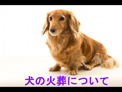 犬の火葬.jpg