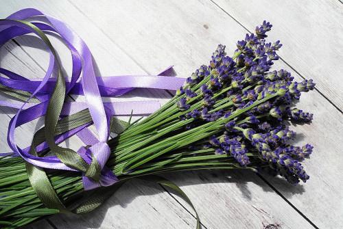 lavender-2395071_1280.jpg