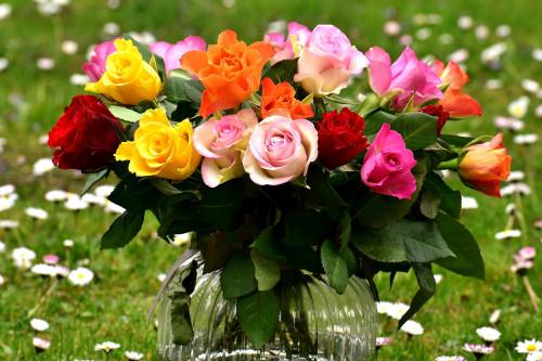 roses-2230459_1920.jpg