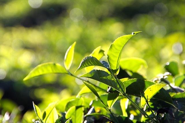 オーダーメイドの紅茶をお探しの方は「ムレスナ」のムレスナティーをどうぞ~高品質な天然素材を使用~