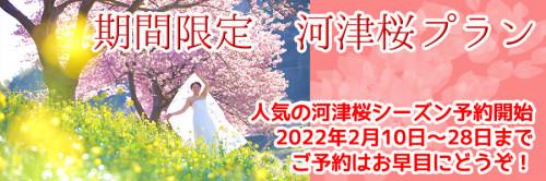 南伊豆河津桜プラン2022.jpg