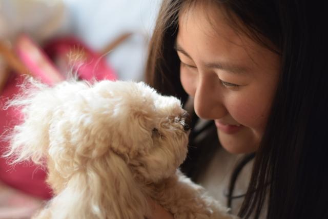 犬のアロハシャツやセーターなどハンドメイドの商品を提供
