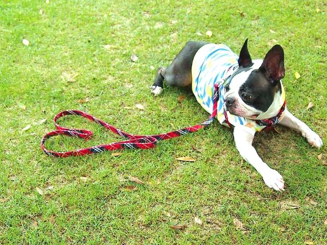 犬服(セーター・アロハシャツ)でお散歩をもっと快適に!~通販で犬服をお求めなら~