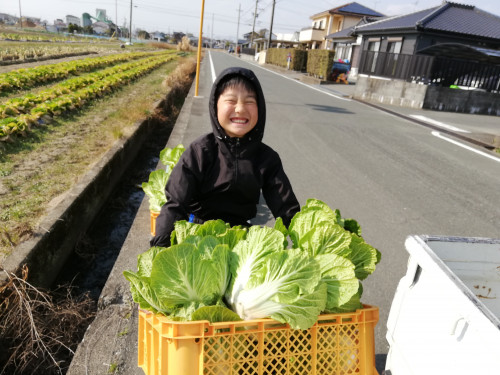 毎日先着30名様にきとう農園の無農薬白菜プレゼント!