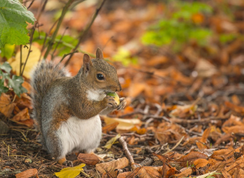 squirrel-3772585_1280 (1).jpg