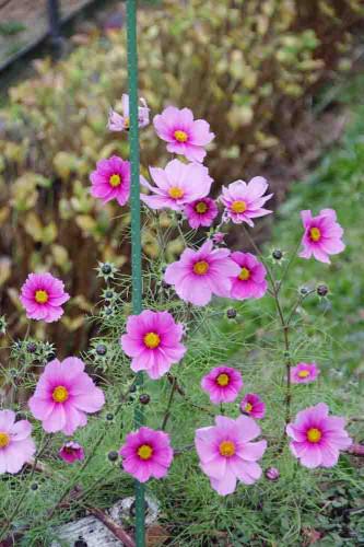 11 お花.jpg