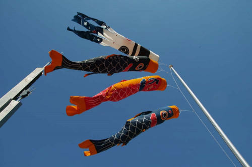 鯉のぼり 2.jpg