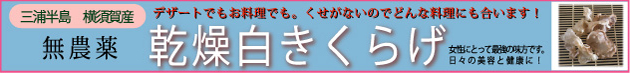 国産 乾燥白きくらげ 横須賀産