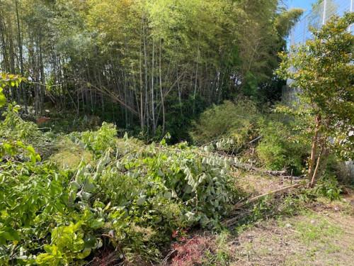 20年伸び続けた木もスッキリ