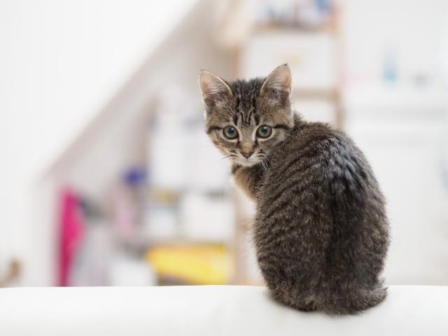 なぜ猫背になってしまう?
