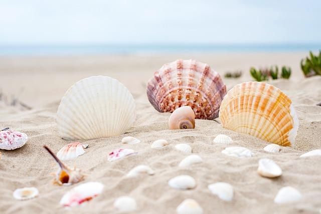 砂浜に並んだ綺麗な貝殻
