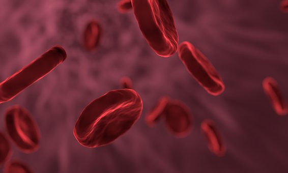 red-blood-cells-3188223__340.jpg