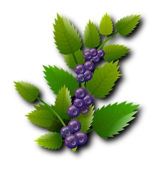 blueberries-1992478__340.png