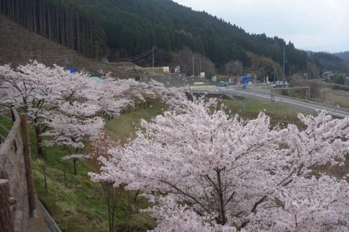 桧垣桜公園20180405.jpg