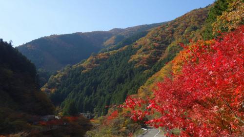 面河紅葉2.jpg