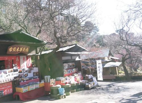 2018年1月の熱海梅園開花状況最新版.jpg