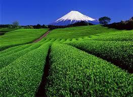 富士山と茶畑.png