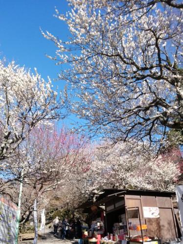 Atami Baien'Plum Garden'