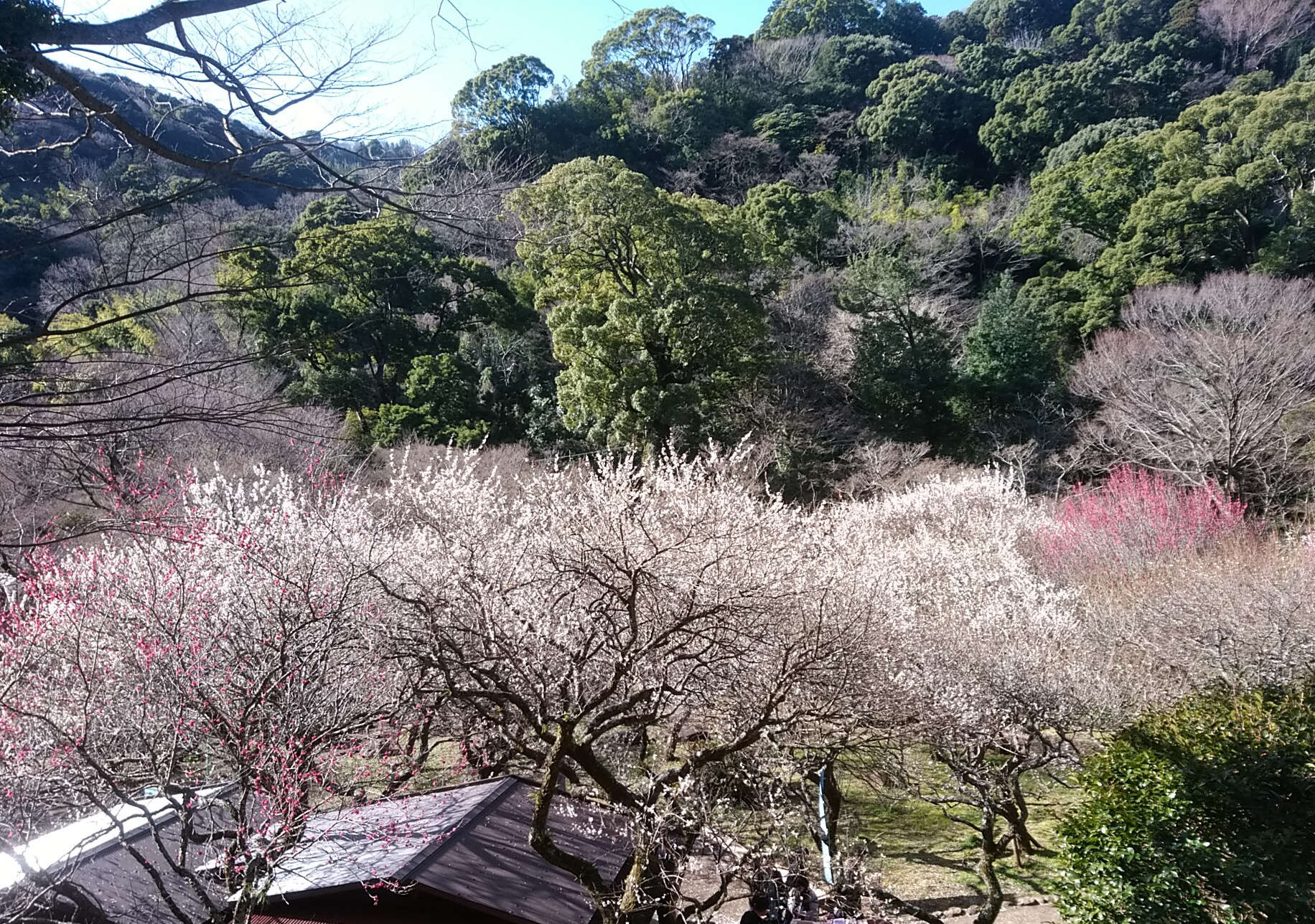 Tokiwagi Yokanten has a branch at Atami Plum Garden