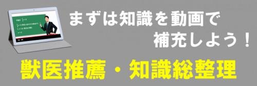 獣医 推薦 知識総整理.png