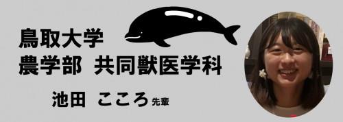 鳥取獣医.png