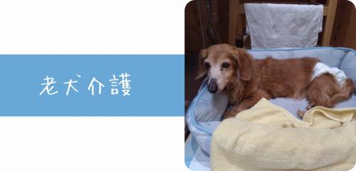top老犬介護.png