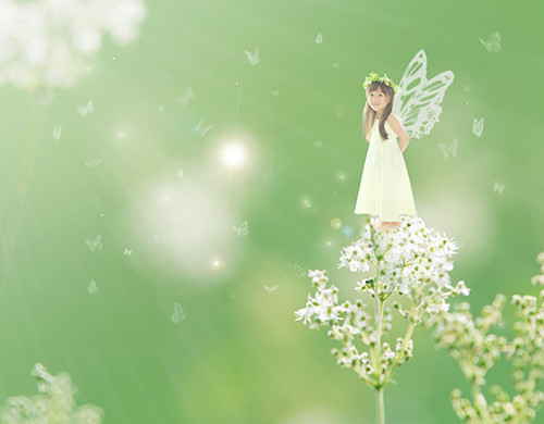 キャンバスF6蝶々.jpg