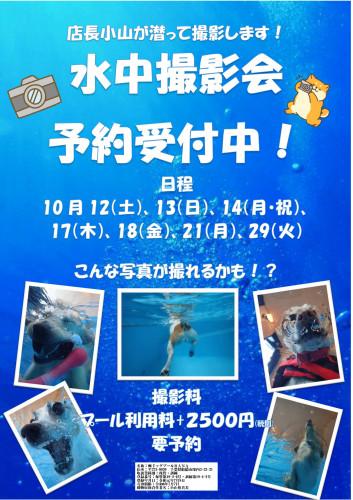 水中撮影会POP_01.jpg