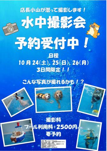 水中撮影会POP2020_01.jpg